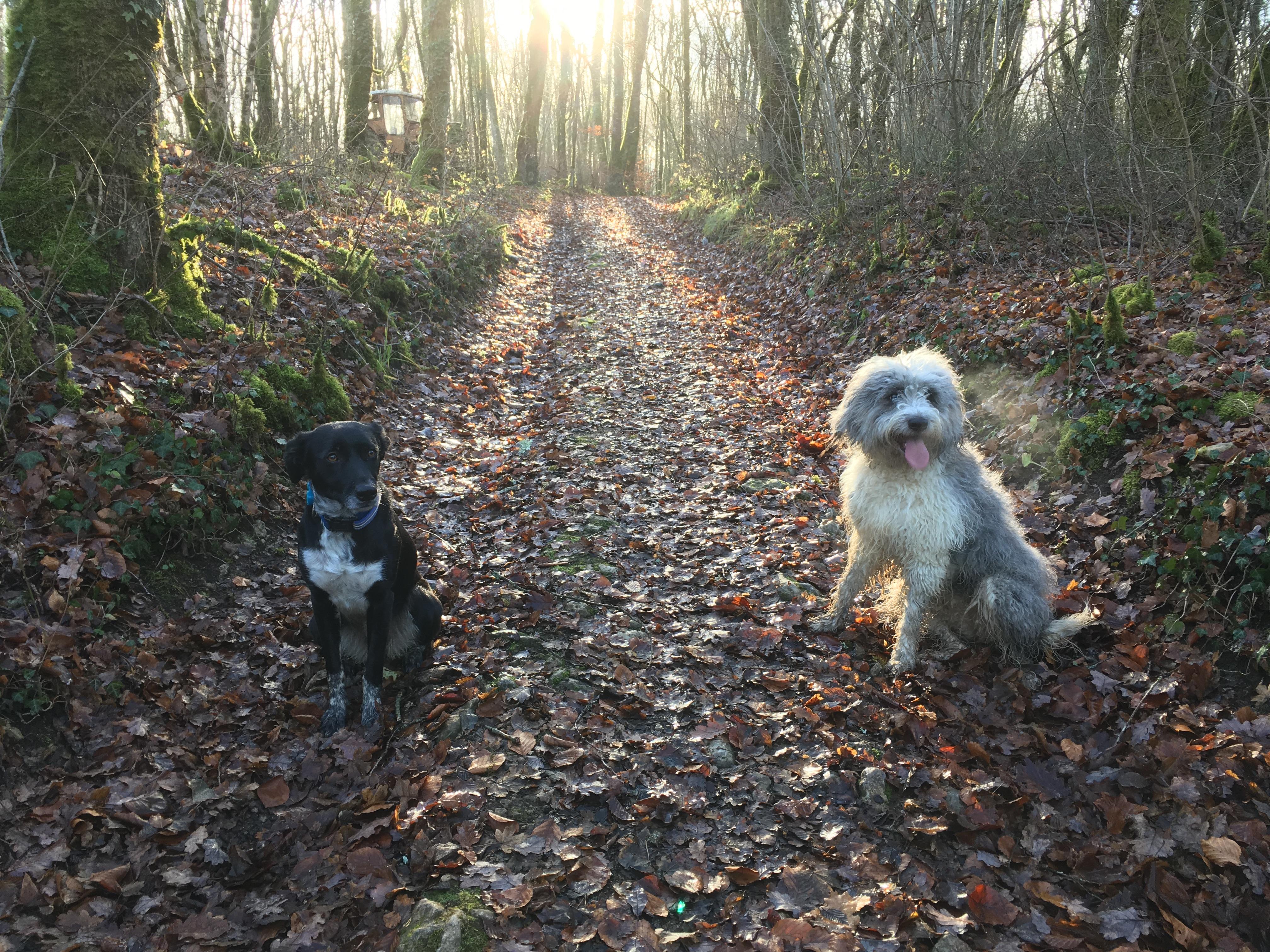 Les filles en forêt d'automne