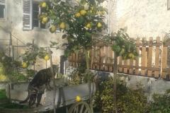 Le chat qui fait coing...