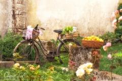 Vélo de campagne
